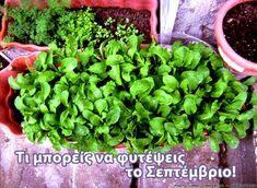 Celery, Diy And Crafts, Herbs, Vegetables, Plants, Food, Gardening, Decoration, Decor