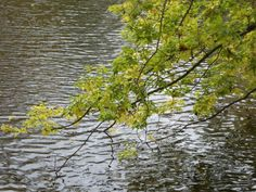 Der Teich im Schlosspark, hier trifft Franzi den geheimnisvollen Fremden. (Der Geschmack von Liebe)