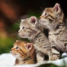 Precious kitties