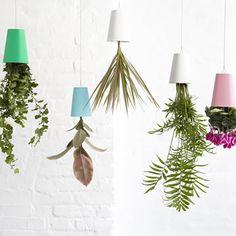 Turn your home and kitchen into a vibrant natural habitat with Boskke Sky Planters, which allows you to save floor space by hanging plants from the ceiling.