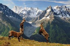 Wild life in Northern Pakistan.
