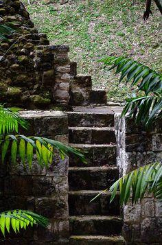 Some of the many steps at Yaxha Ruins Guatemala, near by Tikal and Flores
