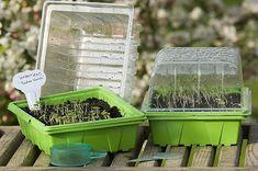 mes semis filent que faire permaculture semis semences pinterest permaculture. Black Bedroom Furniture Sets. Home Design Ideas