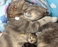 snuggling cat family