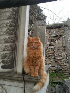Karacaahmet kedisi