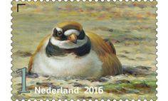 http://collectclub.postnl.nl/postzegelproducten/griend-vogels-van-het-wad.html