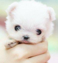 puppy!! so sweet!