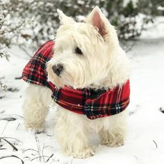 "6,520 Likes, 30 Comments - Westie Moments® (@westiemoments) on Instagram: ""LAST CHANCE to save money! Click the link in my bio @westiemoments to see the SALE CODE! Only…"""