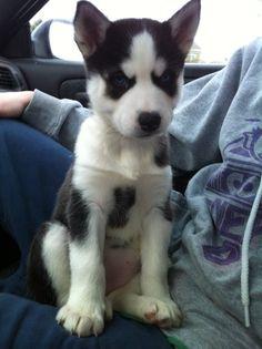 Holy crap! I want one!