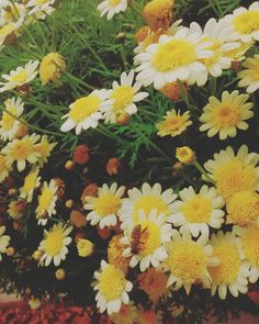 Lomography de my cocoro. 20:03 Gat demet editor. Saludos a todos, aguante el frio vieja :'v . . . . . . . . #vintage #editor  #ComparteSinFiltro  #lomography  #flowers  #bee #hipster  #indie  #pale  #travelgram  #travel #Adventure  #80 #autumn http://tipsrazzi.com/ipost/1521393299989033296/?code=BUdEyVJgXFQ