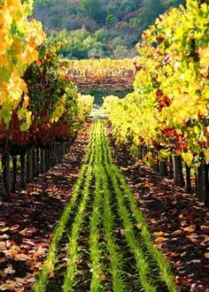 Wine, wine accessories, wine gifts, tips, and information about wine for wine lovers. Sonoma Vineyards, Wine Vineyards, Napa Sonoma, Oh The Places You'll Go, Places To Travel, Places To Visit, Wine Lovers, Toscana Italia, Sonoma Valley