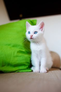 Kittens believe that all nature is occupied with their diversion. - FA Paradis de Moncrif (1687-1770)