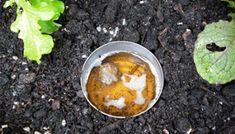 12 Organic DIY Remedies for Your Garden