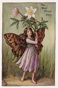 WindFlower Flower Fairy Vintage Print c1927 by TheOldMapShop
