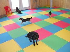 doggy day care flooring....rubberflooringdirect.com