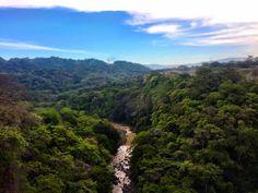 Costa Rican rainforest.