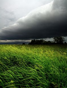 June Winds Photograph by Phil Koch - June Winds Fine Art Prints and Posters for Sale