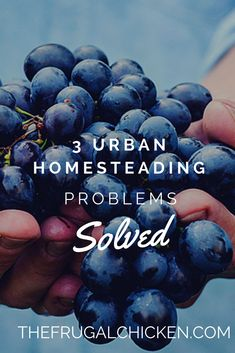 Are you an urban homesteader? You'll want to read these 3 secrets to successful urban farming. From FrugalChicken