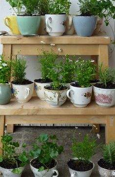 Teacup herbs ~ succulents would be cute too!