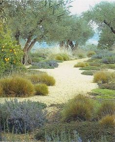 (native gardening) Gorgeous mix of Mediterranean and California native plants in this low-water landscape designed by Arleen Ferrara of Satori Garden Design. This is like the California version of Beth Chatto's dry garden in the UK. Low Water Landscaping, Outdoor Landscaping, Outdoor Gardens, Landscaping Ideas, Landscaping Plants, Hillside Landscaping, Backyard Ideas, Inexpensive Landscaping, Rustic Backyard