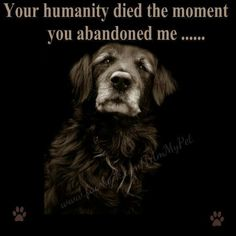 ༻⚜༺ GS ༻⚜༺  People who abandon animals will have a special place in hell.
