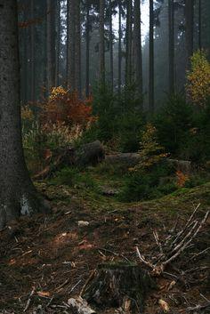 Farben im nebeligen Wald (by seeker0204)