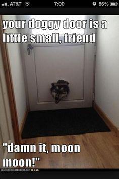 Doggie door is too small