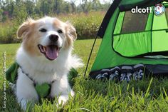 What better way to enjoy #camping than with your #dog by your side? With our Alcott Pup Tent they can be!