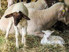 Η αναπαραγωγή των ζώων http://ift.tt/2h5d4og