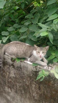 Beloved stray from the streets of Kolkata. Courtesy Mohar Basu on Meow Mumbai | #meowmumbai