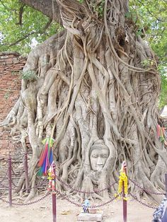 "Buddha and the Bodhi Tree... Bodhgaya, India The Bodhi Tree (""Tree of Awakening,"" also known as the Bo Tree) in Bodhgaya is a direct descendent of the tree under which Siddharta Gautama attained enlightenment."