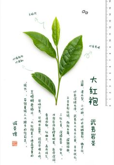 The Atlas of Wu Yi Rock Tea - chinese loose tea and teaware wholesale, buy bulk and loose china tea
