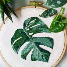 We love this Monstera potted plant leaf hand embroidered by using a DMC embroidery hoop and thread. Hand Embroidery Projects, Hand Embroidery Patterns, Diy Embroidery, Cross Stitch Embroidery, Embroidery Designs, Embroidered Leaves, Leaf Drawing, Leaf Crafts, Needlepoint Patterns