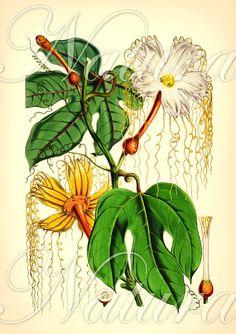 love this botanical print