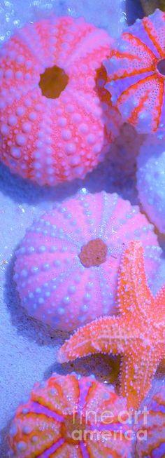 Iridescent Shells - ©Carol McGunagle (via FineArtAmerica) Amazing picture!!!!!