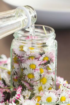 Daisy tincture - for acne, blackheads and blemished skin .- Gänseblümchen-Tinktur – gegen Akne, Mitesser und unreine Haut – Kostbare Natur The daisy contains many valuable ingredients that you can preserve in a tincture and use all year round. Diy Beauté, Diy Y Manualidades, Natural Cosmetics, Natural Remedies, Beauty Makeup, Beauty Hacks, Beauty Tips, Beauty Care, Beauty Products