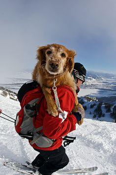 #Jackson_Hole Ski Patrol   Photo by Explore Annenberg   snowzine.com