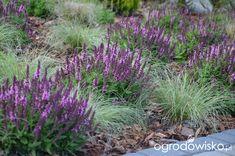 """Jak """"ożywić"""" mój szmaragdowy ogród - strona 1057 - Forum ogrodnicze - Ogrodowisko Forest Garden, Green Grass, Garden Inspiration, Garden Plants, Perennials, Magnolia, Mists, Home And Garden, Yard"""