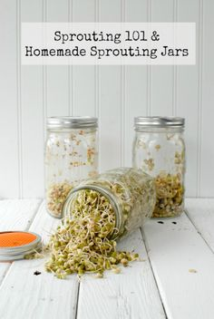 Sprouting 101 and DIY Sprouting Jars