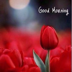 you are searching for good morning beautiful massages. The best image is available on this website to wish you good morning. Happy Morning, Good Morning Picture, Good Morning Flowers, Good Morning Good Night, Morning Pictures, Good Morning Wishes, Happy Sunday, Morning Music, Morning Texts