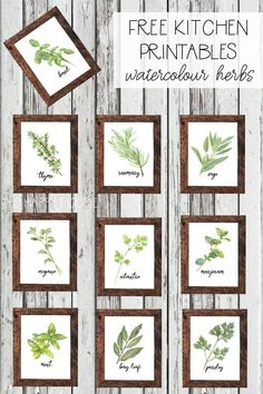 Watercolour Herb Free Kitchen Printables {in 10 designs Ready for a fresh new look in the kitchen for your home? These free watercolor herb kitchen printables are the perfect touch for brightening up you kitchen space for summer! Layout Design, Wall Design, Herb Wall, Nouveau Look, Kitchen Wall Art, Wall Decor For Kitchen, Kitchen Gallery Wall, Kitchen Decor Themes, Botanical Prints
