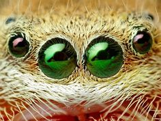 Beauty is in the eye...eyes...yadda, yadda, yadda.