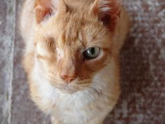 One-Eyed Cat . Cats are Evil and Plan World Domination - Photographic Proof ~ The Ark In Space Crazy Cat Lady, Crazy Cats, Animals Beautiful, Cute Animals, Beautiful Cats, Baby Animals, One Eyed Cat, Puppy Mills, Animal Rights