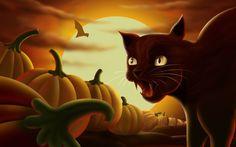 Cat w pumpkins