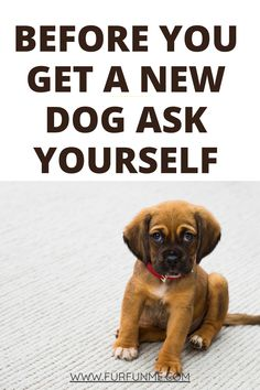 Vet Questions, New Puppy Checklist, Adoption Options, Dog Health Tips, Puppy Classes, Sick Dog, Live Long, Dog Care, Rescue Dogs