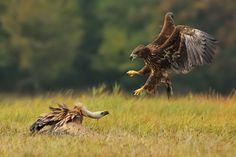 Ornithology Message Board - Msg: 28971667