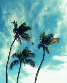 pretty palm trees