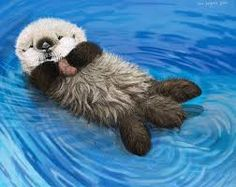 Image result for fluffy otter