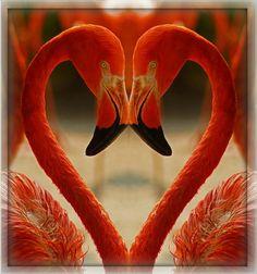 ✿ ❤ I love flamingos! Foto Flamingo, Flamingo Art, Pink Flamingos, Pretty Birds, Beautiful Birds, Animals Beautiful, Cute Animals, Tropical Birds, Exotic Birds
