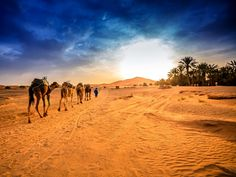 Covering an area larger than the United States, the Sahara makes up about 8% of the world's land surface. The orange sands of the Moroccan Sahara are an accessible entry point for adventurers hoping to experience the largest hot desert in the world.